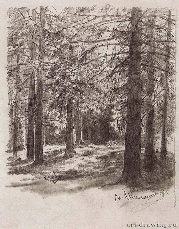 Галерея изобразительного искусства ...: www.art-drawing.ru/gallery/349-shishkin-ivan-ivanovich/comment...